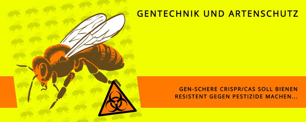 CRISPR-Bienen
