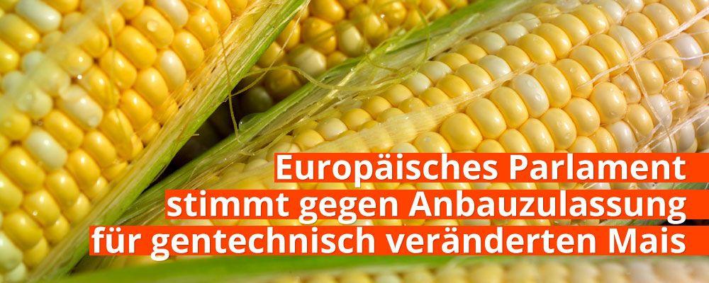 Europäisches Parlament stimmt gegen Anbauzulassung für gentechnisch veränderten Mais