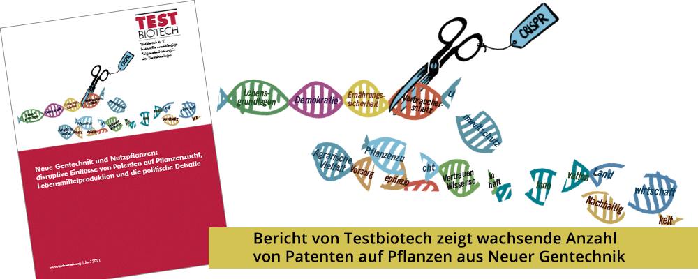 Bericht von Testbiotech zeigt wachsende Anzahl von Patenten auf Pflanzen aus Neuer Gentechnik