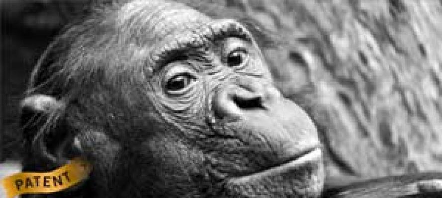 Patente und Tierschutz / Schimpanse mit Patent-Label am Ohr